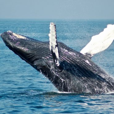 Bitcoin's Halving Brought Significant Rise in the Number of Whales